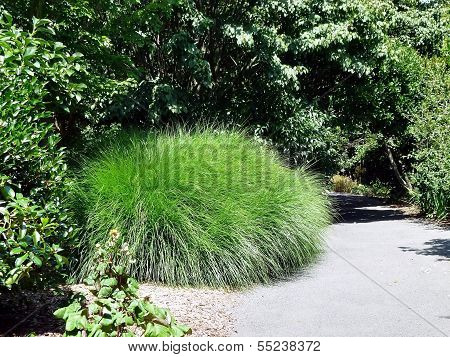Bunch Of Ball Shaped Long Grass