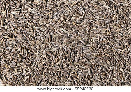 Cumin (cummin) Seeds