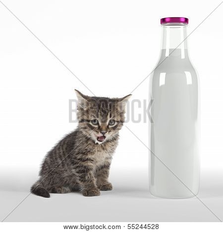 Kitten With Huge Bottle Of Milk