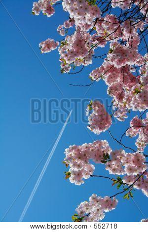 Flying To The Land Of Sakura