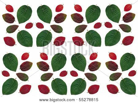 composition of multicolor autumn leaves as pattern for tablecloth
