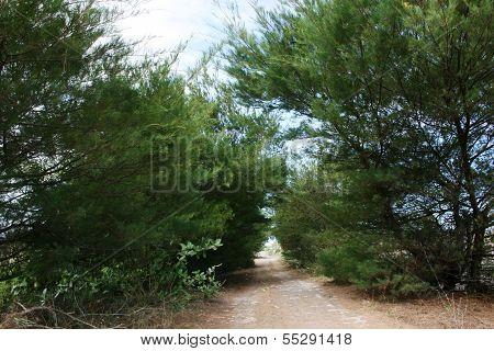 Bugel beach atmosphere and Karangwuni