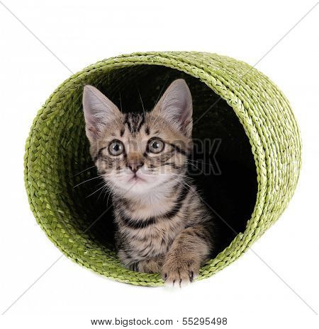 Little kitten in wicker basket isolated on white