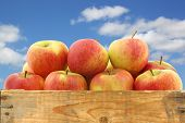 pic of wooden crate  - New Dutch apple variety called  - JPG