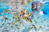 picture of butterfly fish  - Woman snorkeling in clear tropical waters among colorful fish - JPG