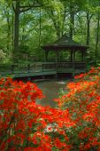 image of gazebo  - Beautiful manicured shade garden with a Gazebo surrounded by blooming rhododendron and azalea shrubs and trees and ferns - JPG