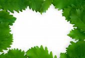 Green Leaves On Paper Frame Background Isolated