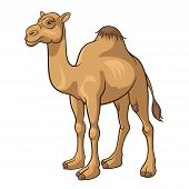 picture of camel  - Cartoon camel isolated on a white background vector illustration - JPG