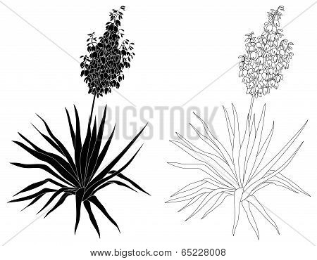 Plant Yucca, contours and silhouettes