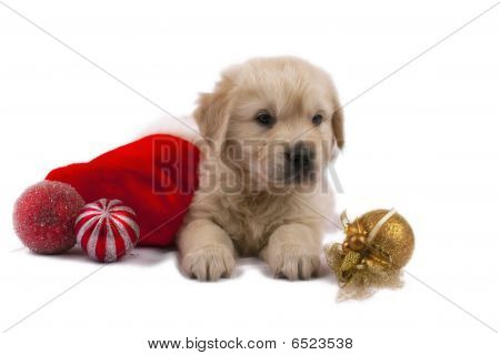 Golden Retriever Puppy Isolated On White With Christmas Toys And Sock