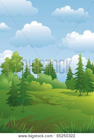 Landscape, green summer forest