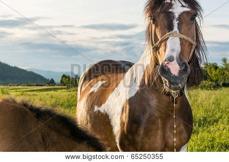 Horse With Saliva Dripping From Its Mouth