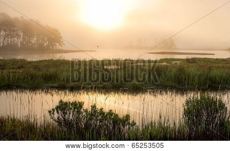 Morning Marsh