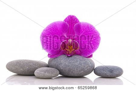 Gray stones with macro of red orchid