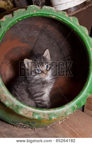 Kitten In A Pot