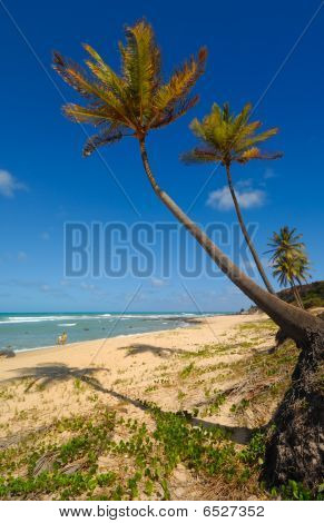 Palm Trees And A Beautiful Beach At Praia Do Amor Brazil