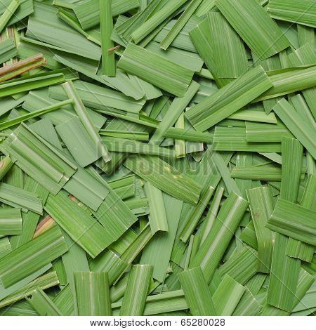 Citronella Grass Leaves Background