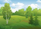 foto of birching  - Landscape - JPG