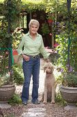 stock photo of standard poodle  - A ninety year old woman and her standard poodle greet you at the entrance to their country home - JPG