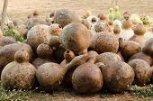stock photo of calabash  - Harvest of  big ripe autumn calabash in Thailand - JPG