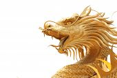 picture of dragon head  - Head Golden dragon statue on white background - JPG