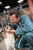 stock photo of cattle dog  - Breeder petting dog outside the barn - JPG