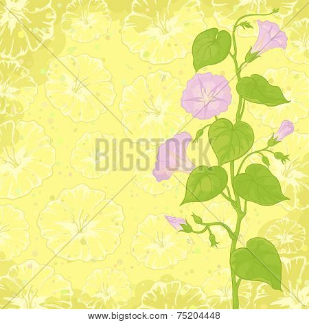 Background with flowers Ipomoea