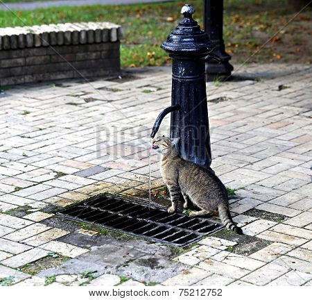 Cat Drinking From A Water Column