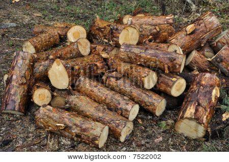 Pile Of Wet Pine Chocks