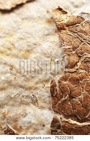 Close up of rotten coconut (macro)