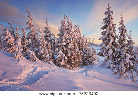 Christmas landscape. Path in winter forest