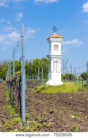 God''s torture with vineyard near Palava, Czech Republic