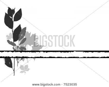 a base de hierbas
