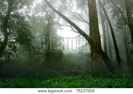 Mysterious landscape of foggy forest