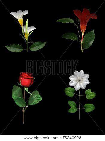 Flower Collage, High Resolution
