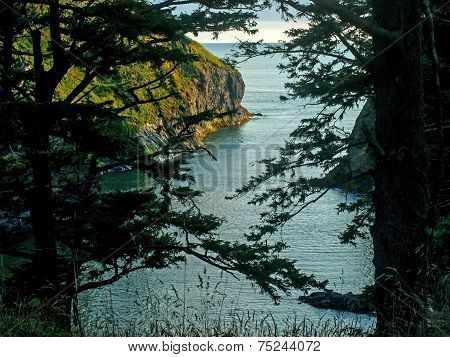 A View Of An Ocean Cliff Framed By Evergreen Trees