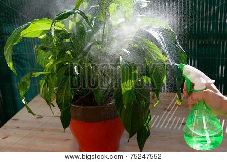 Woman Watering Houseplants With A Sprayer