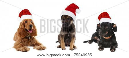 Dogs in Santa Claus isolated on white