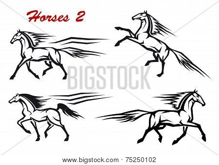 Powerful and freedom stallions