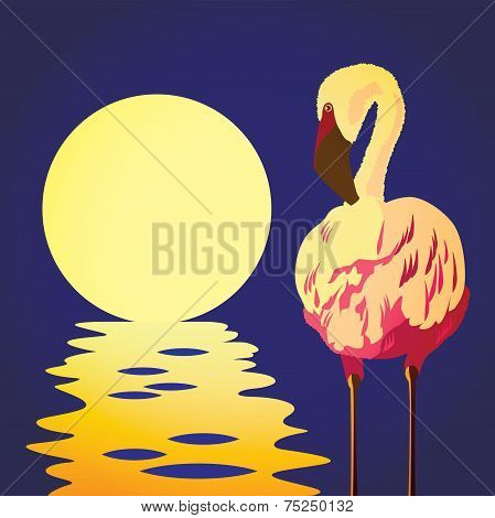 Flamingo In The Sun