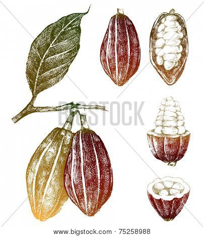 hand drawn cocoa beans set in color
