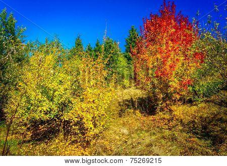 Wonderful Golden Autumn