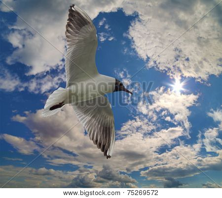 photo of gull in sky with clouds and bright sun