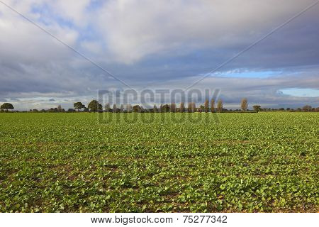 Autumn Fieldscape