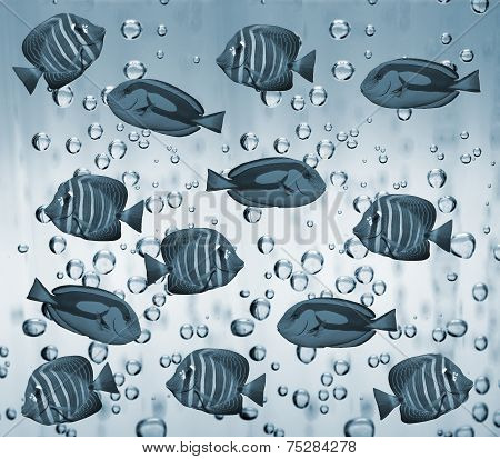 Tropical reef fish in water as background