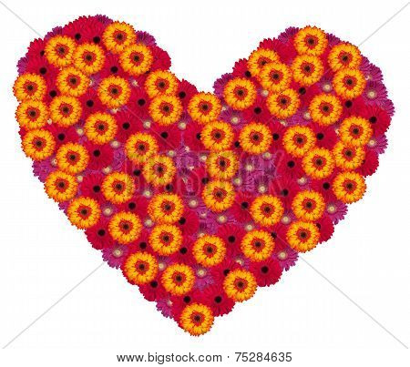 Heart from gerbera flowers