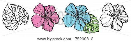 Set of hibiscuses