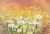 image of chamomile  - Vintage oil painting daisy - JPG