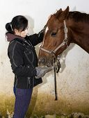 picture of feeding horse  - equestrian feeding the horse - JPG