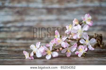 Attractive White Cymbidium Orchid Flowers with Very Light Purple on Edges Lying on a Wooden Table with Fuzzy Background.
